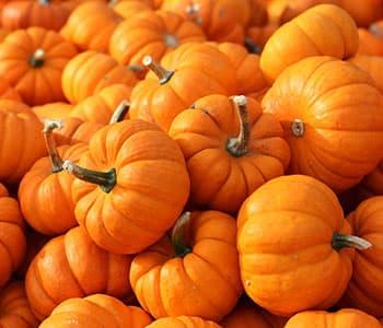plusieurs citrouilles oranges en vrac pour halloween