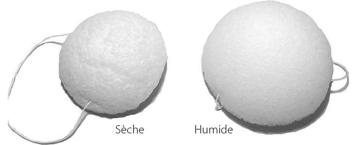 image montrant deux eponges blanches l'une seche et l'autre humide
