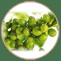grains de café vert pur en grappe dans un cercle sur fond blanc