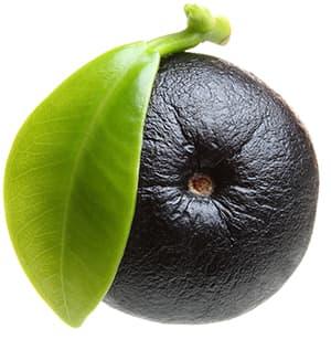 fruit noir ridé entouré d'une feille verte sur un fond blanc