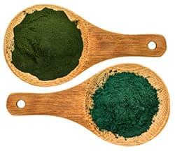 deux cuilleres en bois remplies de poudre d'algues