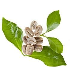 grains de café vert avec des feuilles vertes - WeightWorld