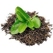 tas de thé séché avec une plante verte sur le dessus