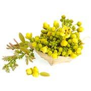 plante jaune et verte dans un panier sur un fond blanc