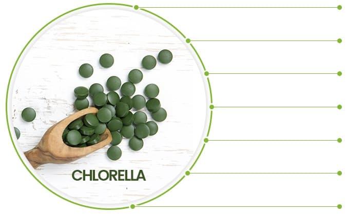 Infographie sur la chlorella. Au milieu d'un cercle est une cuillère en bois avec des pilules vertes de chlorella