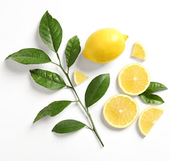 feuille de citronier et citrons découpés en morceaux sur un fond blanc