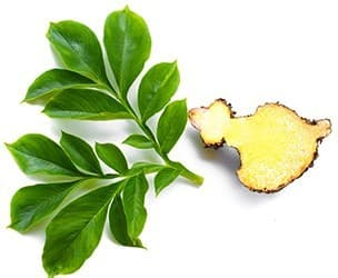 fruit de garcinia et fueille verte sur un ofond blanc