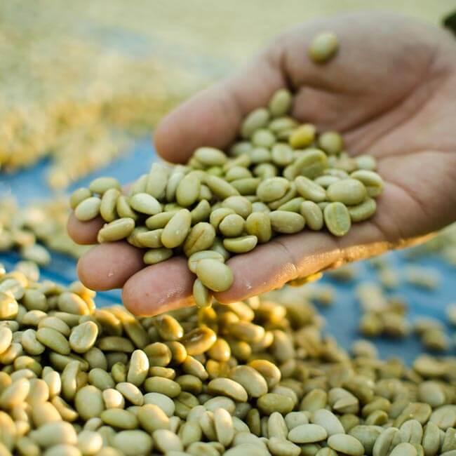 Green Coffee pour perdre du poids en toute sérénité