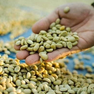 Green Coffee dans votre alimentation