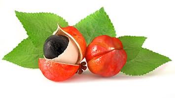 fruit guarana